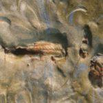 insectos en las obras de arte